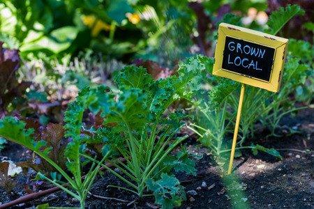 Colorado Grown Organic CBD